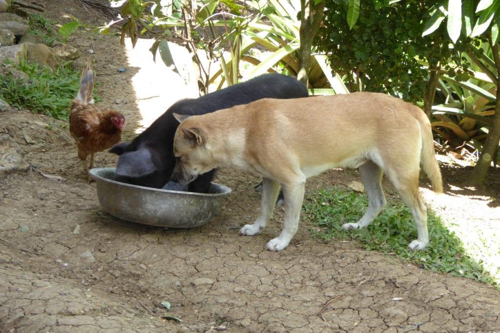 Tiere trinken